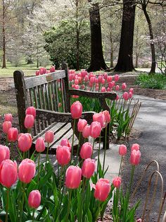 Garden Reverie with pink tulips
