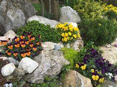 20 inspiráló sziklakert síkterületre is | Balkonada Outdoor, Plants, Outdoor Decor, Flowers, Garden