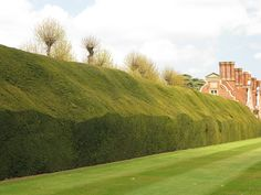 Yew hedge, Blickling Hall Norfolk