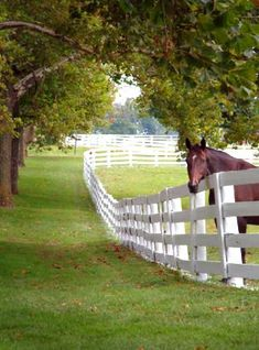 Jennings & Gates: Notes from a Virginia Country House™: The Annual Hunt Country Stable Tour Every year, for one weekend, the horses of Middleburg & Upperville, VA, kindly open the doors of their stables to visitors. Country Farm, Country Life, Country Living, Country Homes, Country Fences, The Farm, My Horse, Horse Love, Brown Horse