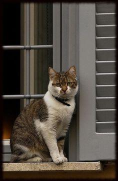 Esperando na janela....