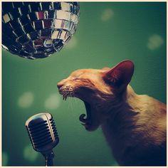 Rock'n Roll!!