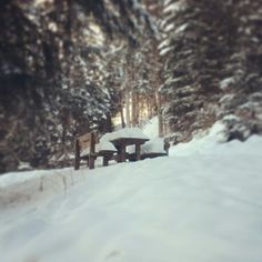 Winter, Snow in Sudtirol - Italy
