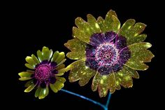 Enchanted by the luminous splendor of nature, California-based photographer Craig Burrows captures one-of-a-kind photos of glowing flora. Burrows uses ultraviolet-induced visible fluorescence—a fancy term for a photographic process that employs high-intensity ultraviolet light—to produce pictures of plant-life that appears to glow. Shimmering with light and beaming with color, his series of fluorescent flowers conveys the underlying beauty of the natural world.