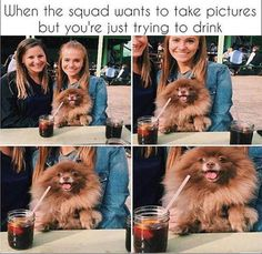 TrollPics Daily Afternoon Funny Picdump of The Day 13 Pics) - TrollPics Animals And Pets, Funny Animals, Cute Animals, Animal Fun, Cat Dog Cartoon, Cool Pictures, Funny Pictures, Funny Pics, Videos Funny