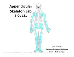 appendicular-skeleton- study guide
