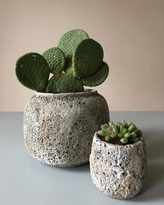 Opuntia inermis 'monique' & Frithia pulchra (baby toes) in concrete Cacti And Succulents, Planting Succulents, Planting Flowers, Cactus Planta, Cactus Y Suculentas, May Garden, Deco Nature, Plant Illustration, Shade Plants