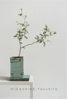 fragile mimosa