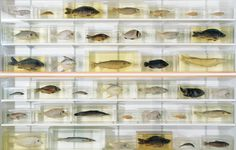 Damien Hirst - Isolated Elements Swimming in the Same Direction for the Purpose of Understanding