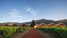 Bodegas Ysios : designed By Santiago Calatrava