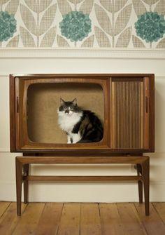12 DIY Designs for your Favorite Feline Friend