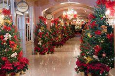 Christmas Tree Lane at the Royal Sonesta, New Orleans - Provided by the Royal Sonesta