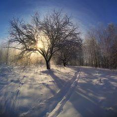 35PHOTO - Sergey Shlyaga - Frost and sun ...