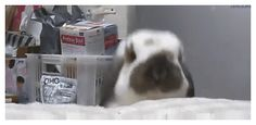 bunny trying to get attention