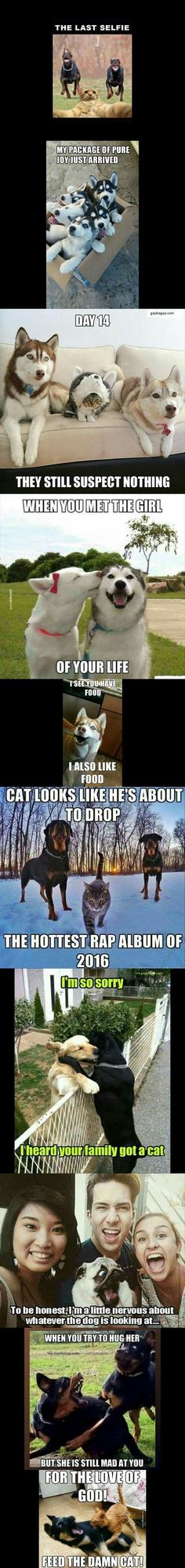 Top 10 Funniest Memes ft. Funny Dogs And Cats
