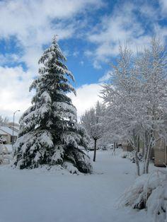 snowy morning with brilliant blue sky - Prescott Valley, AZ