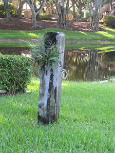 Old hitching post on the pond... love how plants just begin to grow where they can.