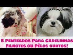 5 Penteados Facéis, Práticos e Rápidos P/ Cachorrinhas Filhotes ou de...