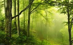 Forest enchanted Wallpapers Pictures Photos Images