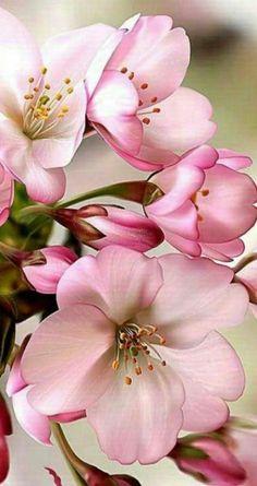 Arte Floral, Flowers Garden, Planting Flowers, Pink Garden, Pink Flowers, Beautiful Flowers, Draw Flowers, Bouquet Flowers, Wedding Flowers
