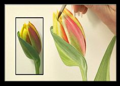 Watercolor Flower Portraits  (Billy Showell )