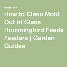 How to Clean Mold Out of Glass Hummingbird Feeders | Garden Guides