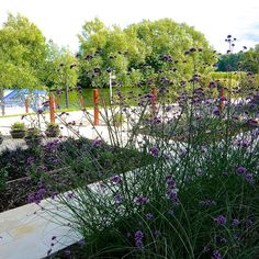 Riverside Garden by Berkshire garden designer Joanne Alderson Design Riverside Garden, Modern Garden Design, Portfolio Design, More Photos, Beautiful Gardens, Planters, Landscape, Photography, Outdoor