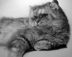 Pencil Sketches by Paul Lung | Cuded