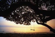 I couldn't think of a more perfect place to swing :)  There for sure will be a swing tied to a tree somewhere in my yard.