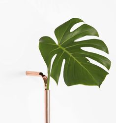 Curved copper pipes form Solo Vases by Guilherme Wentz