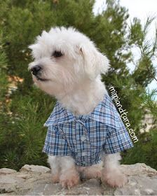 Dog shirt pattern - free pdf Patterns in 6 diff. sizes and step by step Photo tutorial - Bildanleitung