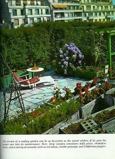 charming roof top garden