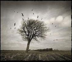 treebirds | bbaxterphoto | Flickr