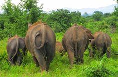 Don't Ride Elephants – Bath them instead All About Elephants, Save The Elephants, Elephant Nature Park, Elephant Sanctuary, Elephant Bath, Elephant Love, Big Animals, Animals Of The World, Most Beautiful Animals