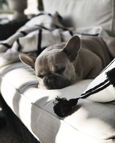Late afternoon naps... . . . . . #gatheredstyle #moringslikethese #theartofslowliving #enjoythelittlethings #dearphotographer… Bulldog Puppies, Cute Puppies, Cute Dogs, Dogs And Puppies, Doggies, Animals And Pets, Cute Animals, Cute French Bulldog, French Bulldogs