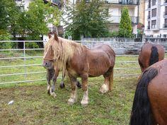 Burguete Horse