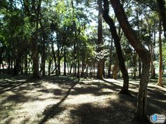 Bosque Boa Vista - Boa Vista - Curitiba | Bosque Boa Vista no Guia de Tudo