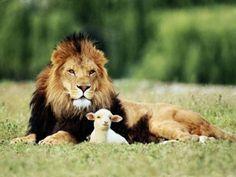 Le Lion et l'Agneau ...ça sonne comme une fable