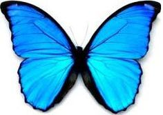Le papillon Morpho - TPE biomimétisme et chimie