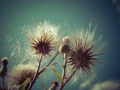 Dmuchawce, latawce, wiatr.