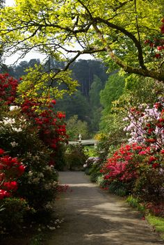 one of my favourite gardens in North Wales - Bodnant Garden in the beautiful Conwy Valley.