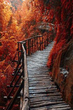 aesthetic autumn beauty bridge fall - image