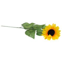 Giant Yellow Sunflower Stem