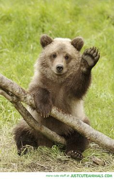 Bear...A friend is one who stands to share Your every touch of grief and care. He comes by chance, but stays by choice. Your praises he is quick to voice...  Meeting you has been a day that will forever be in my heart ... !