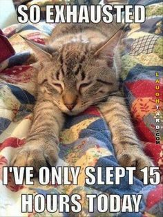 So exhausted #lol #laughtard #lmao #funnypics #funnypictures #humor  #exhausted #cats #funnycats #sleepy