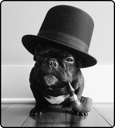 Sophisticated dog… S)