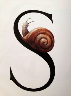 From Bert Kitchen's Animal Alphabet - S is for Snail Animal Alphabet, Alphabet Soup, Alphabet Quilt, Alphabet Letters, Illuminated Letters, Illuminated Manuscript, Typography Letters, Graphic Design Typography, Snail Art
