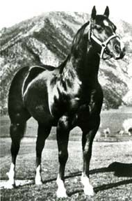 AQHA: Doc Bar. Bred to be a race horse, he ultimately changed the course of AQHA Reining horses forever.
