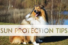 Sun protection tips for your dog