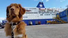 Op vakantie met de hond mee naar Engeland of Schotland? Doen! Ze vinden het hier fantastisch. Ik geef je tips voor jouw vakantie met hond.